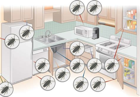 how to prevent cockroaches in kitchen cabinets how to roaches 7 proven ways to roaches in 9529