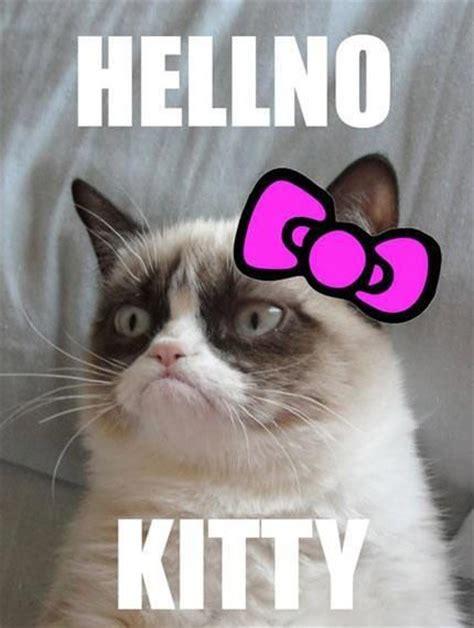 Cat Meme Images - 16 best grumpy cat images on pinterest grumpy cat funny kitties and grumpy cat meme