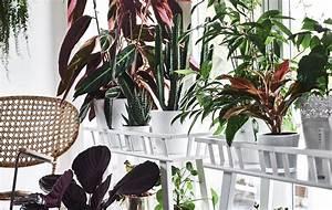Pflanzen Bei Ikea : pflanzen in szene setzen frische ideen ikea ~ Watch28wear.com Haus und Dekorationen