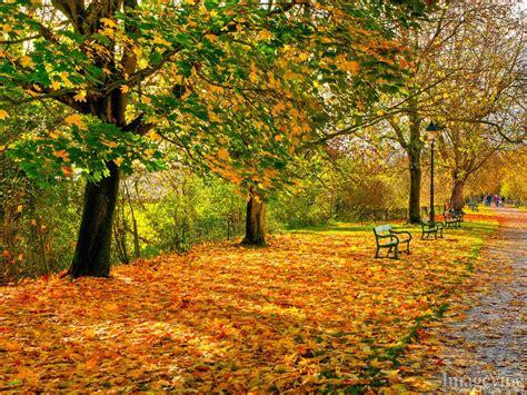 Autumn Dreams Backgrounds - ImageVine