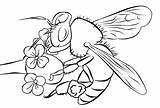 Coloring Flower Bee Realistic Bumblebee Outline Clip Bumble Drawing Bees Flowers Clipart Pages Printable Sheets Cliparts Library Getdrawings Favorites sketch template