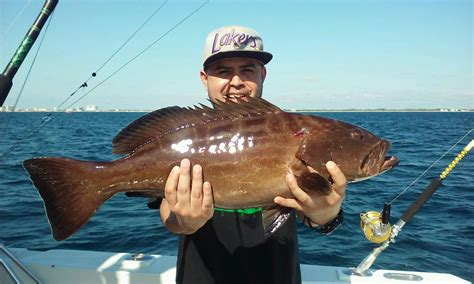 deep lauderdale fishing sea grouper fort florida ft report dropping caught nice guy boat