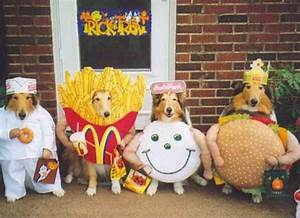 25 Dog Costumes That Will Make You LOL   Brit + Co