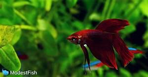 Optimale Aquarium Temperatur : the best most accurate aquarium thermometers 2019 guide reviews ~ Yasmunasinghe.com Haus und Dekorationen