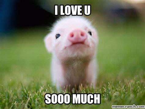 Pig Memes - cute pig