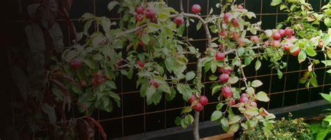 fruit nut berry ornamental tree producers waimea nurseries