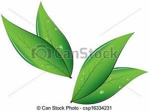 Vectors of Tea leaves Vector illustration csp16334231 ...