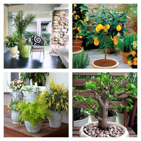 plante en pot pour terrasse 50 id 233 es fra 238 ches