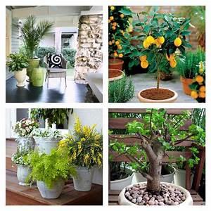 Plantes Grimpantes Pot Pour Terrasse : plante en pot pour terrasse 50 id es fra ches ~ Premium-room.com Idées de Décoration