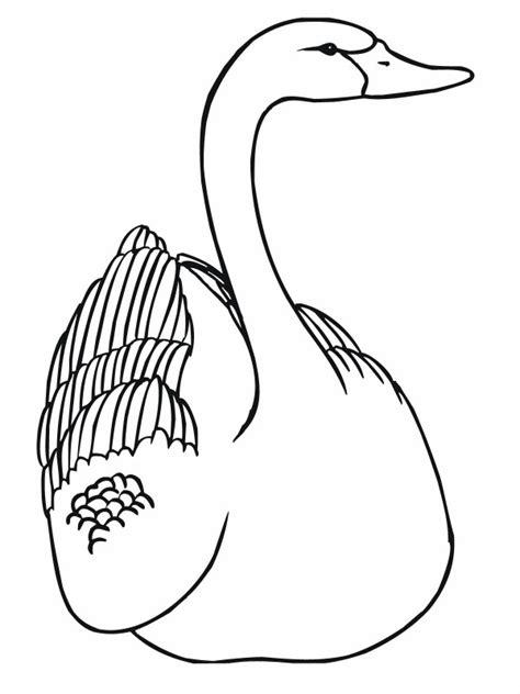 imagenes de cisnes  colorear colorear imagenes