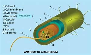Bacteria Versus Archaea