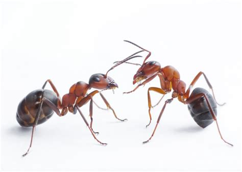 types  ant   infest  home