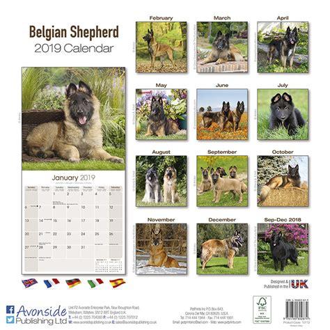 belgian shepherd dog calendars ukposterseuroposters