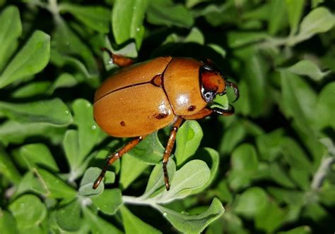 How To Get Rid Of June Bugs On My Porch by How To Get Rid Of June Bugs Naturally 2019 Bugwiz
