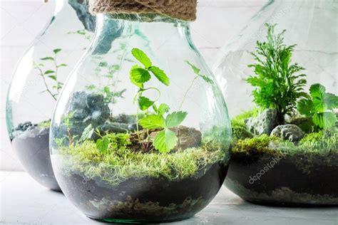 Schöne Lebende Pflanzen In Einem Glas Zu Retten Die Erde