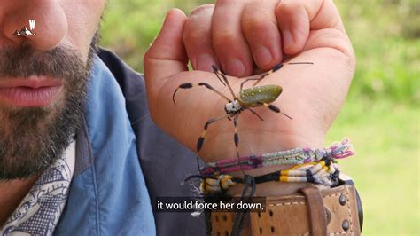 Coyote Peterson - Coyote finds one large creepy spider ...