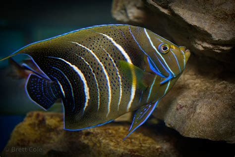 brightly colored fish brett cole photography brightly colored fish sp two
