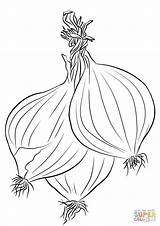 Onions Coloring Pages Printable Three Drawing Categories sketch template