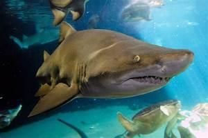 Sharks: New York Neighbors   Wild View