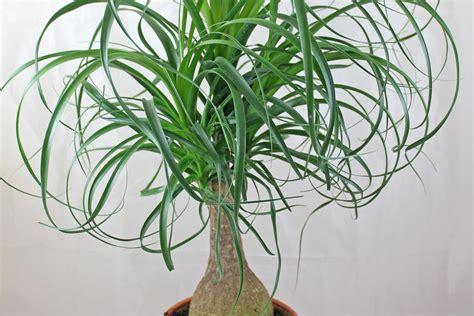 Zimmerpflanze Wenig Licht by Pflegeleichte Zimmerpflanzen