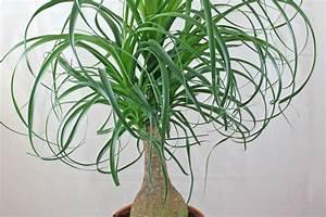 Pflanzen Wenig Licht : pflegeleichte zimmerpflanzen ~ Markanthonyermac.com Haus und Dekorationen