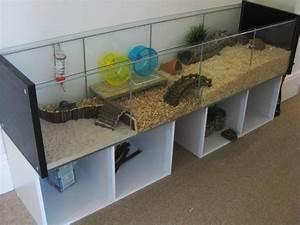 Meerschweinchen Gehege Ikea : ikea china cabinet koopa pinterest meerschweinchen meerschweinchen k fige und hamster gehege ~ Orissabook.com Haus und Dekorationen