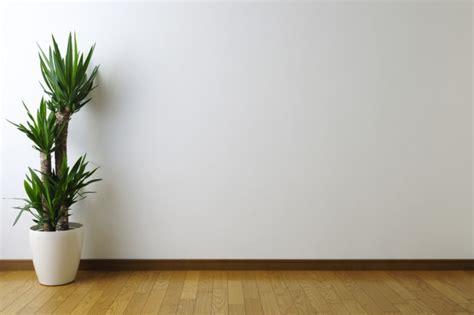 cheap ways  decorate  blank wall shemazing