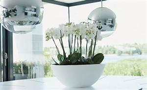 Schöne übertöpfe Für Drinnen : den richtigen blumentopf finden tipps von hornbach ~ Watch28wear.com Haus und Dekorationen