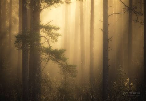 silver time foggy pine forest joni niemelä photography