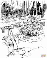 Beaver Coloring Dam Pages Park National Voyageurs Printable Water Game Autumn sketch template