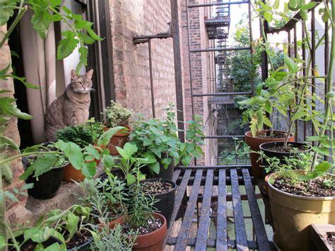 tips  starting   herb garden
