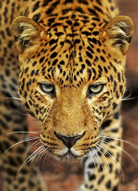 17 Things You Should Never, Ever Name Your Pet Jaguar