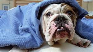 Frostbite Chart Time Hypothermia In Dogs Symptoms Causes Treatments Dogtime