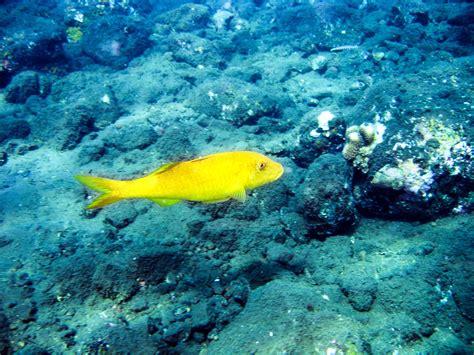 images sea ocean underwater swimming coral reef