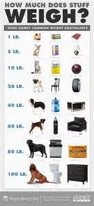 average cat weight how much does stuff weigh infographic education insights