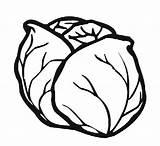 Coloring Cabbage Vegetables Template Kindergarten Fruits Preschool Worksheets Crafts sketch template
