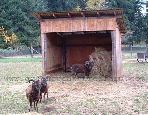 shed for sheep sheep shed sheep