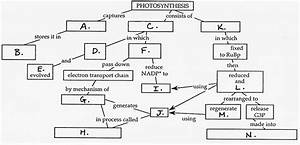 Fill In The Concept Map For Photosynthesis Pictures