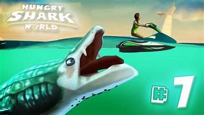 Shark Hungry Whale