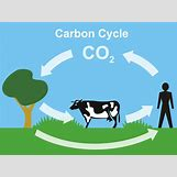Oxygen And Carbon Dioxide Cycle Simple | 1024 x 767 jpeg 64kB