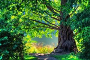 nature landscape spring green tree forest scenery walk ...