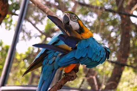 wahana rekreasi alam  edukasi  gembira loka zoo