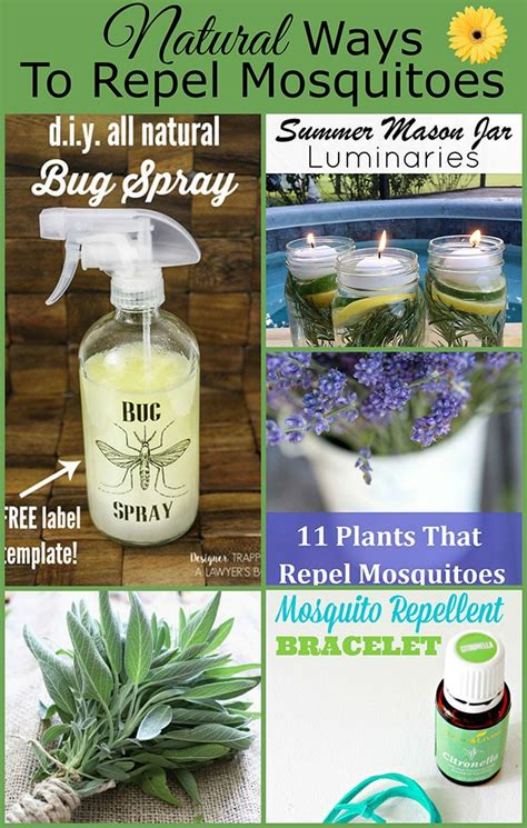 bug spray plants natural ways to repel mosquitoes without bug spray house of hawthornes