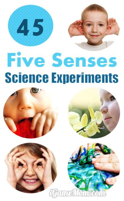 45 science activities for to learn the 5 senses 865   five senses science experiments for kids