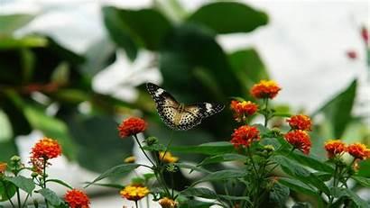 Butterfly Wallpapers Flowers Amazing Desktop Butterflies Android
