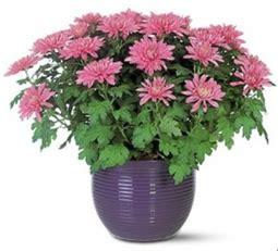 jenis jenis tanaman  bisa mengurangi polusi udara