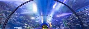Plexiglas Aquarium Nach Maß : aquariumbau brunnen plexiglas pools und acrylglas ~ Watch28wear.com Haus und Dekorationen