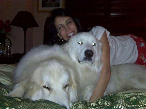 Stephs Pets Stephanie Miller Show