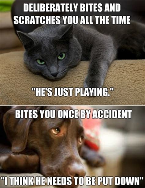 Cats And Dogs Funny Pictures Quotes Memes Funny Images