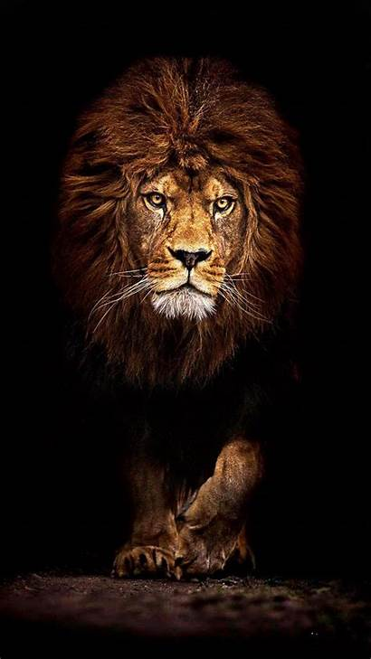 Lion Cool King Danger Lions Nice Fearless